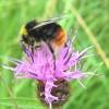 Beelady profile image