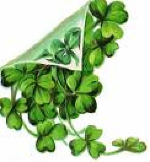 Irish Shamrock