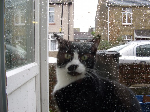 'Let me in!' Ussy decides he'd rather be in the warm instead of out in the rain!