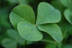 St. Patrick's Day - Famous Irish Folk