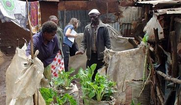 The sack gardens of the Kibera slum in Nairobi, Kenya.