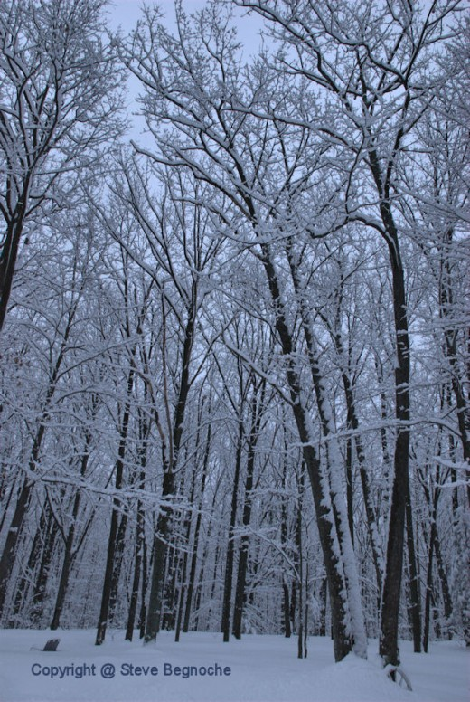 This morning snow blanketed everything.