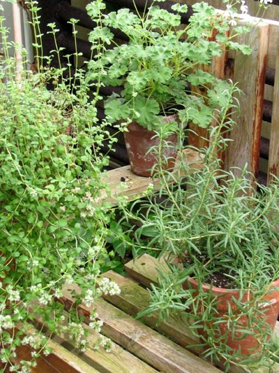 Herbs can be used to create thousands of top herbal remedies!