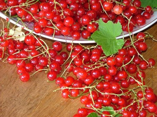 Red currant for juice.