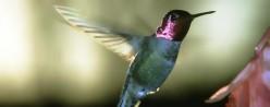 Hummingbird Flower Gardening