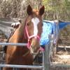 princessrose1234 profile image