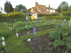 A Beautiful English Allotment Garden