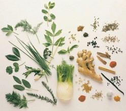 Herbs:  A Pocket List of Conditions and Major Herbs That Support Healing