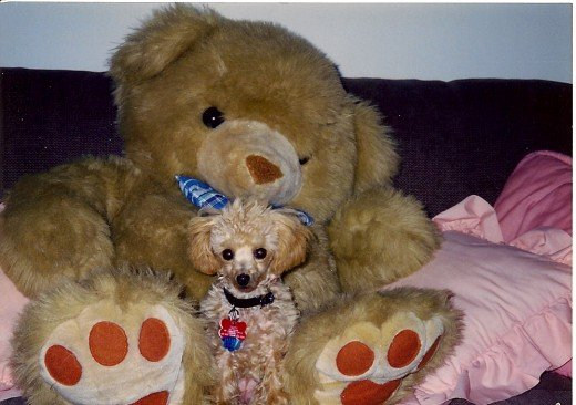 "Taffy and ""Mr. Bear"""