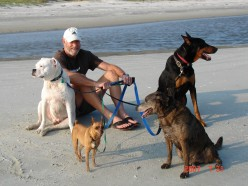 Happy and healthy pups at the beach.