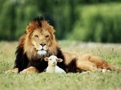 JESUS CHRIST: THE LION AND THE LAMB