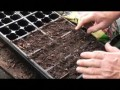 When is the best time to start germinating seeds before Spring