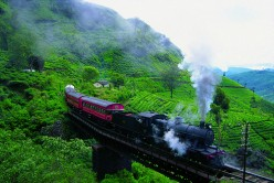 Tea Estate & Train - Sri Lanka