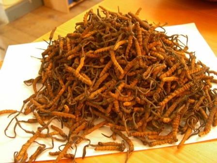 Cordyceps--a fungus that can reputedly live up to 1,000 years. It tonifies the body and energizes.