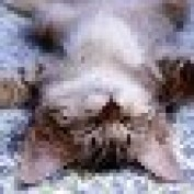 caravalhophoto profile image