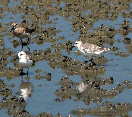 Birds at Dhanushkodi
