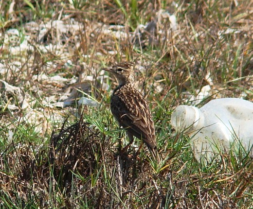 Bird at Dhanushkodi