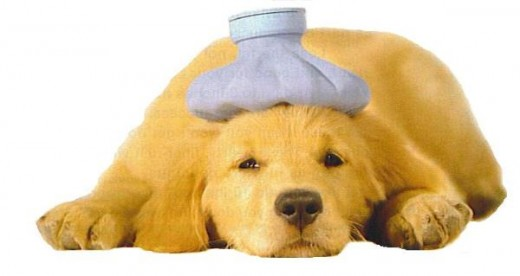 how to save a puppy with parvovirus