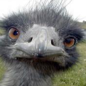 Muggsyboy profile image