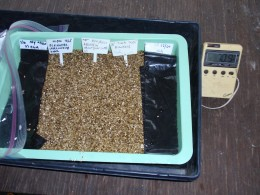 9 x 12-in. plant trays are convenient to plant seeds with similar needs.