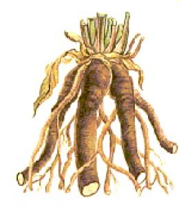 Comfrey Natural Root