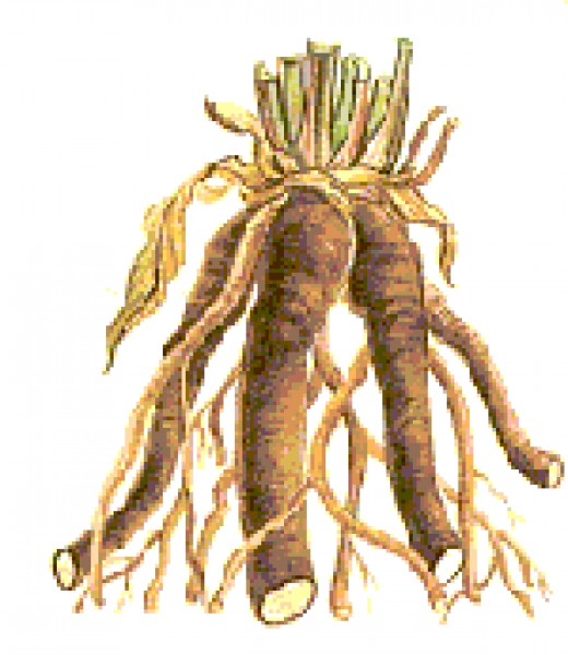 Comfrey Natural Root