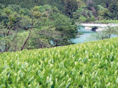 four CSA farms that make