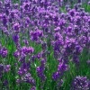 Smells Good! Aromatherapy Does Not Need to Be New-Fangled, New Age, or Expensive