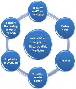 image:www.naturaltherapypages.com.au/.../diagram.jpg