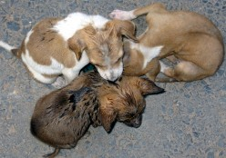 Puppies ----what are looking for?