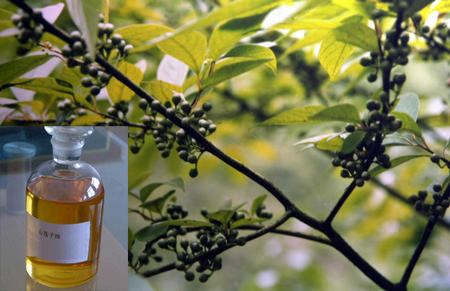 Eucalytus oil used for aromatherapy massage