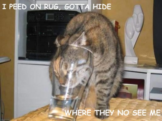 Stupid cats isn't trying to hide, he is helping himself to a triple Vodka, what a stupid cat.