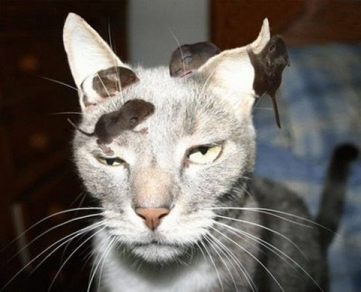 You stupid cat, you're supposed to catch the mice, by the way you ok, you look drunk!