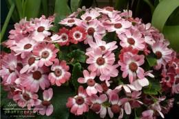 Flower Image 2