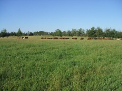 Forage and Pasture Management Part I: The Basics of Soils and Plants