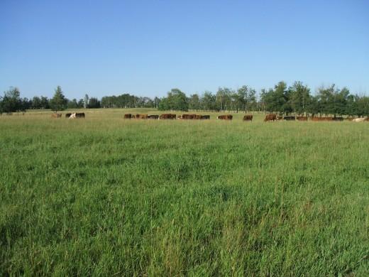Healthy pasture = healthy livestock
