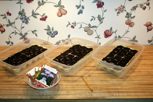Seeds, Dibble, Planters, and Greenhouses