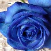 BlueBlink profile image