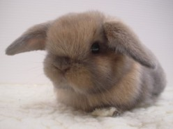 Why Your Bunny Bites You