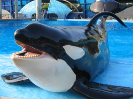 Shamu may be worth millions to Sea World, but that doesn't change the fact that he is a danger to humans.