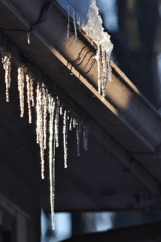 A cold Saturday morning brought icicles gleaming in the sunrise.