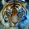 RedTiger22 profile image