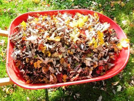 add leaves to compost in the fall or store in green bag for use in spring. Bob Ewing photo
