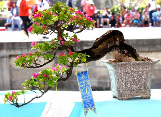 Bonsai First Prize Winner Windswept Class