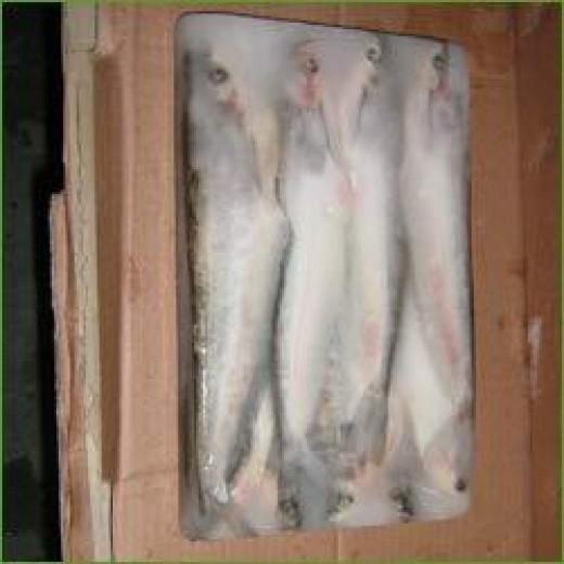 Pabda Fishes