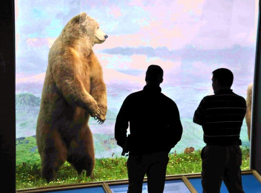 Museum visitors are dwarfed by Alaskan brown bear figures in an exhibit.