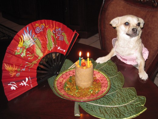 My chihuahua partner, Chika, celebrating dog birthday day during the Chinese New Year Celebrations.
