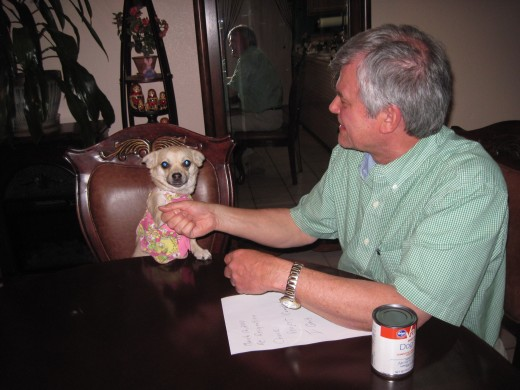 Our business venture concluded, I shake hands with my chihuahua assistant and we go our separate ways.