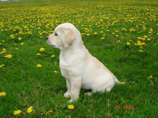 ... Shedding Dog Breeds Hypo Allergenic Dog Breeds To | Dog Breeds Picture
