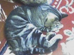 The posing cat 2